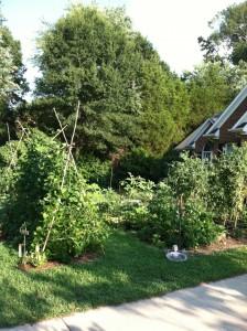 Edible Landscape 8 1 2011