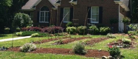 Tess' Till-less, Organic Garden 2012