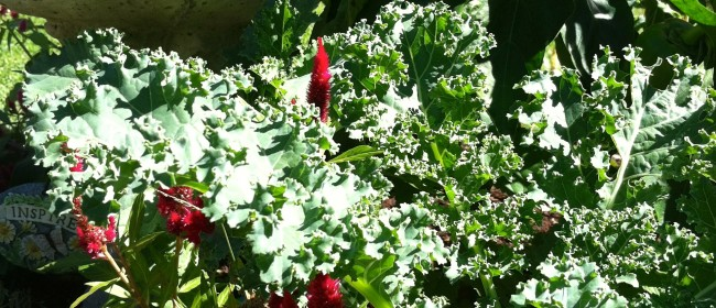 October Gardening Chores in the Piedmont