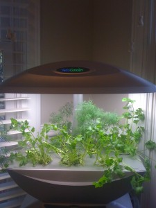 Aerogarden with Cilantro and Dill 4 2011
