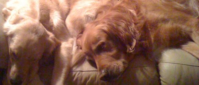 'Crazy Good' Dog Treat Recipes