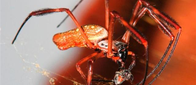 Natural Spider Repellent Recipe